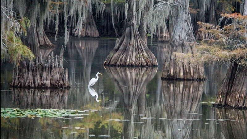 caddo-lake-state-park-min