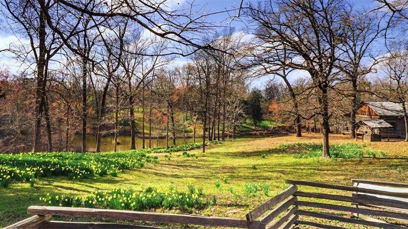mrs-lees-daffodill-garden-min